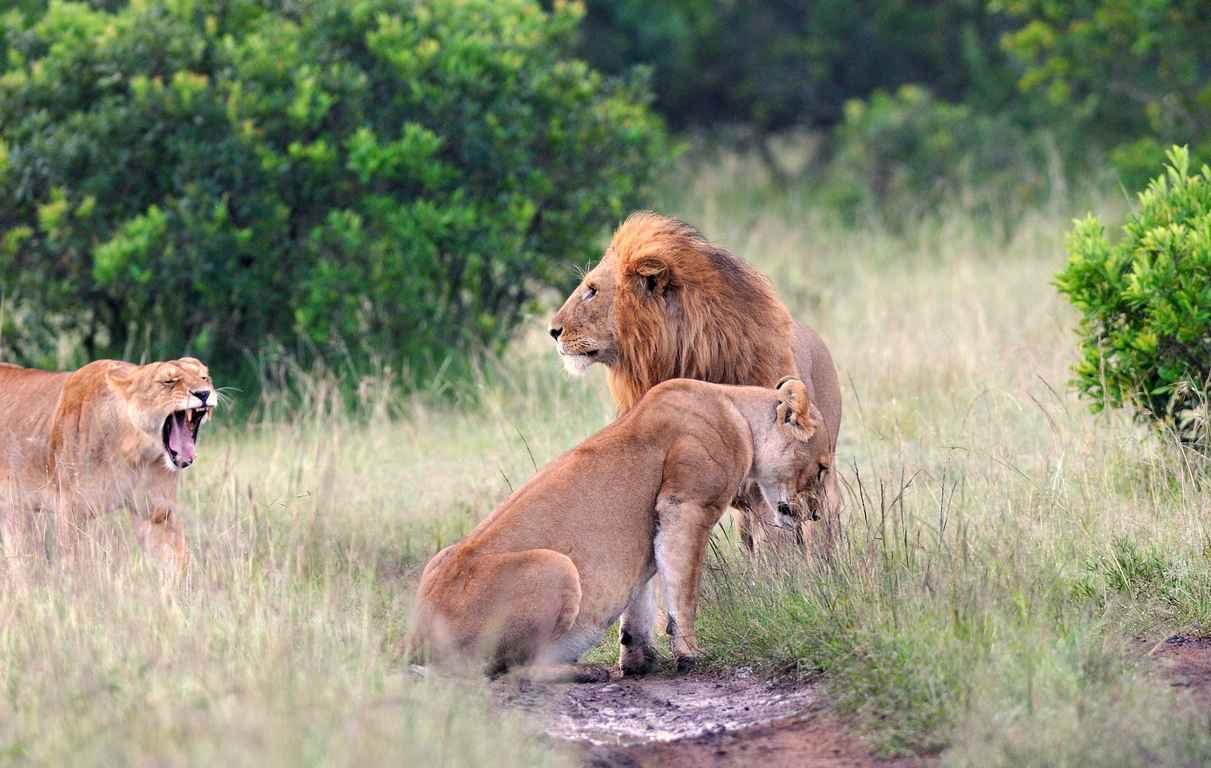 Direction le Kenya, pour un combiné Safari & Plage !