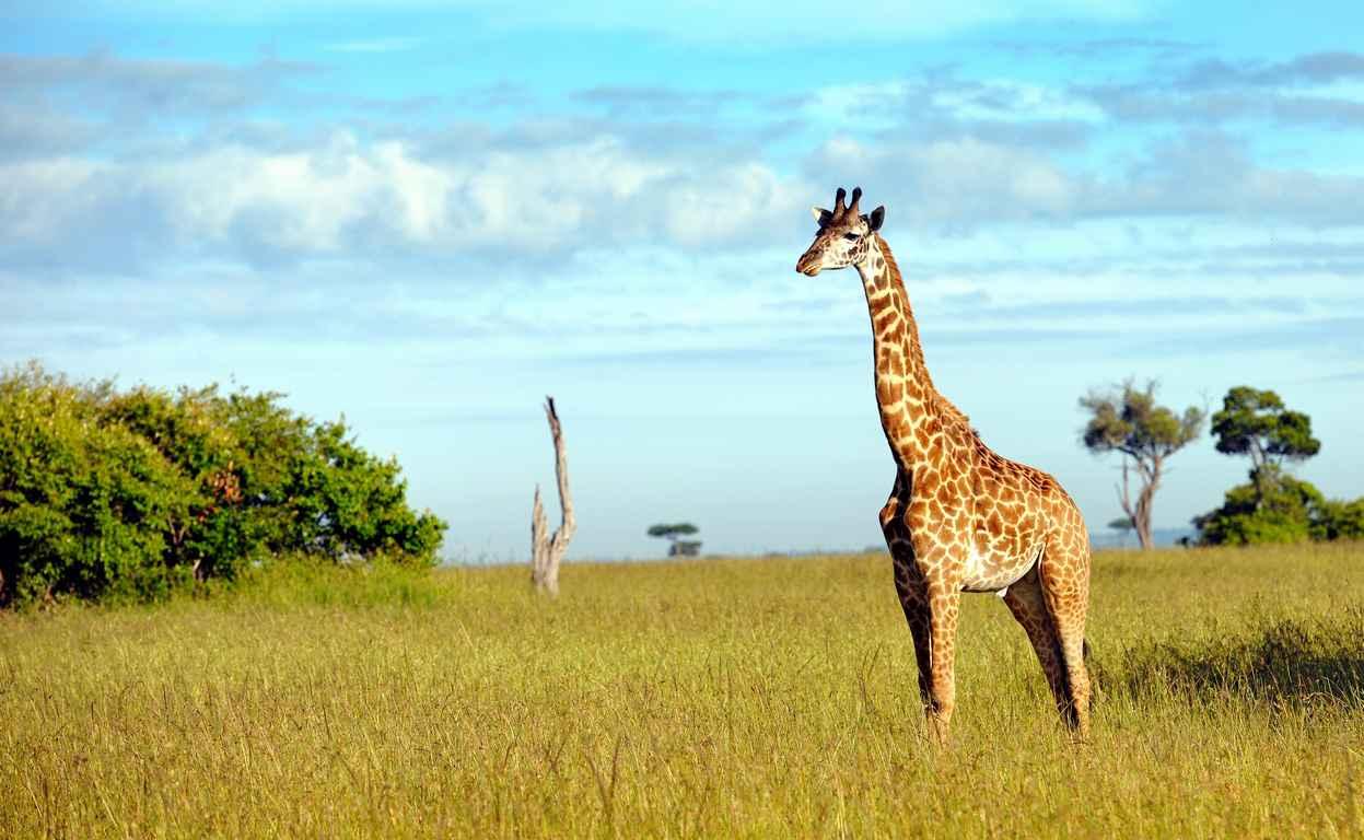 Circuit Privé Kenya Safari et Plage 8J/7N