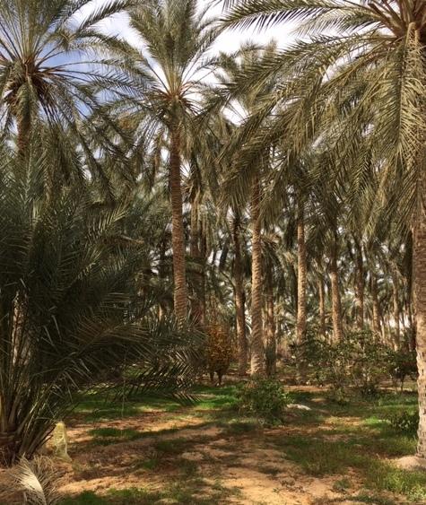 Circuit Djerba - Tozeur